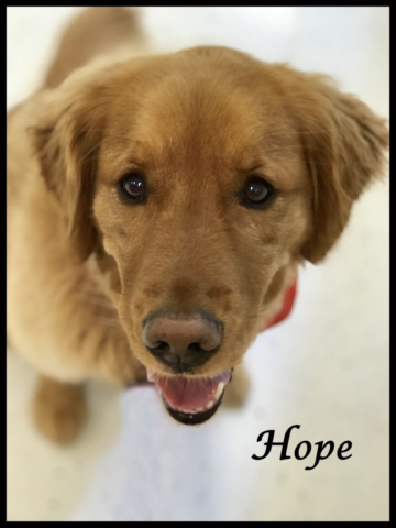 Hope Therapy Dog