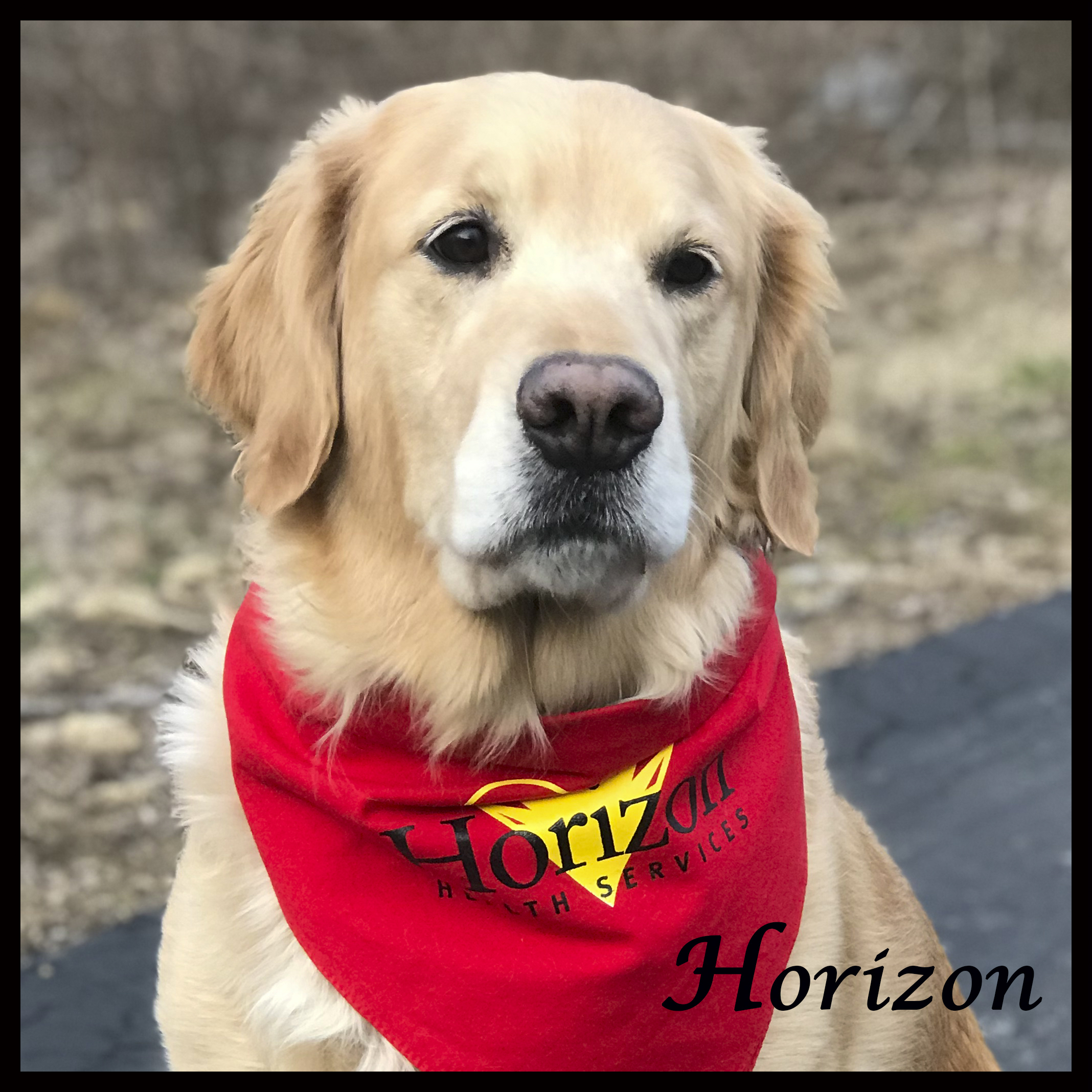 2475a1affe81 Therapy dog program at Horizon