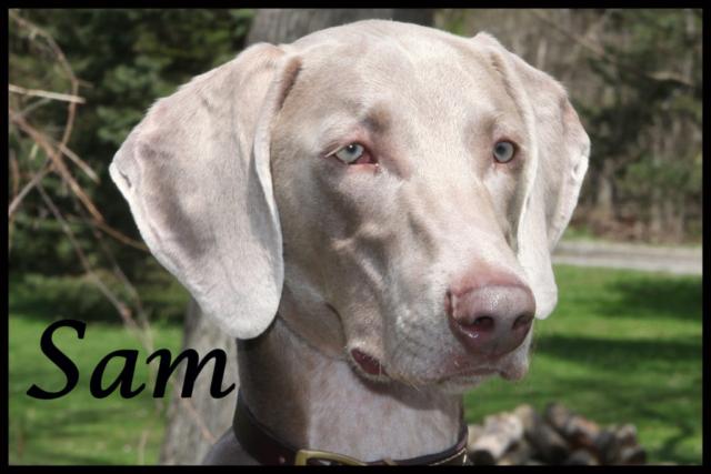 Sam Therapy Dog